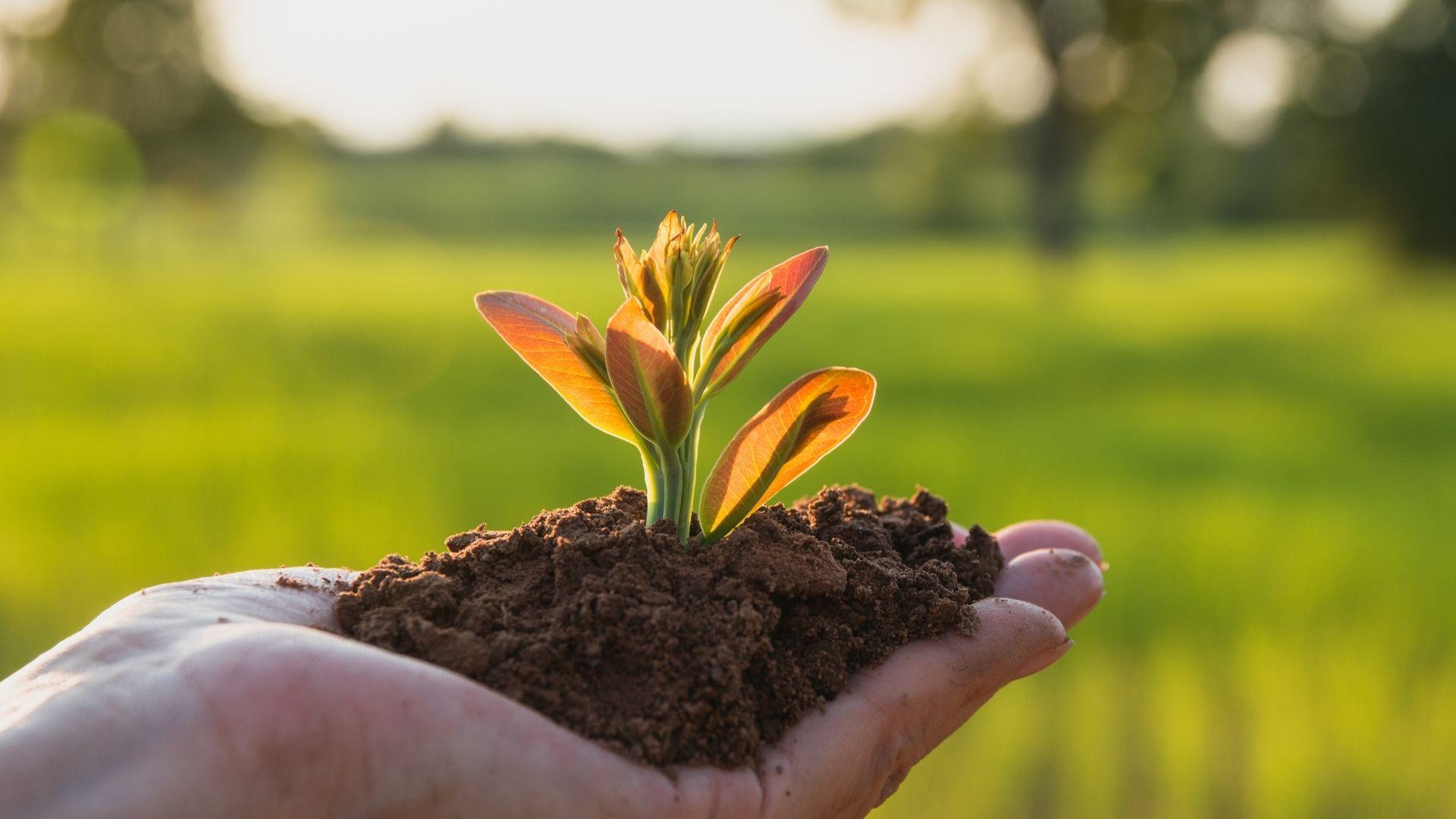 Éco-conception web : comment ancrer votre entreprise dans une démarche éco-responsable